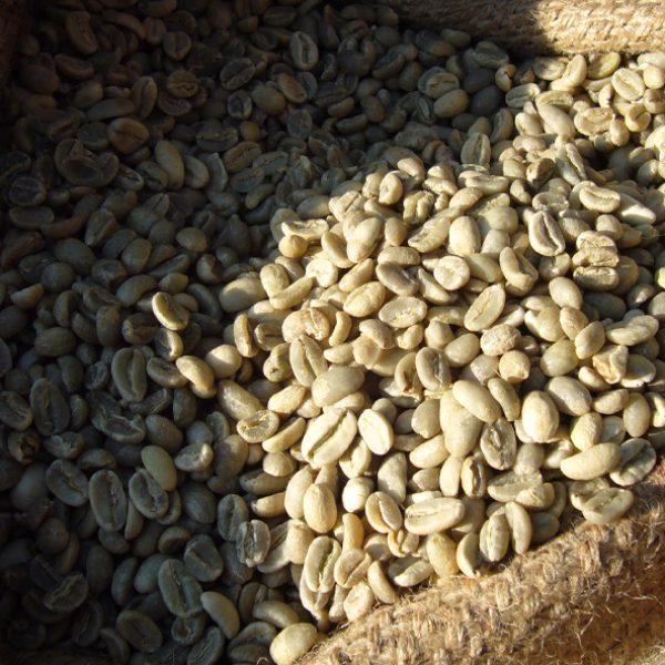 Wissen 010 - rohe Kaffeebohnen im Sack